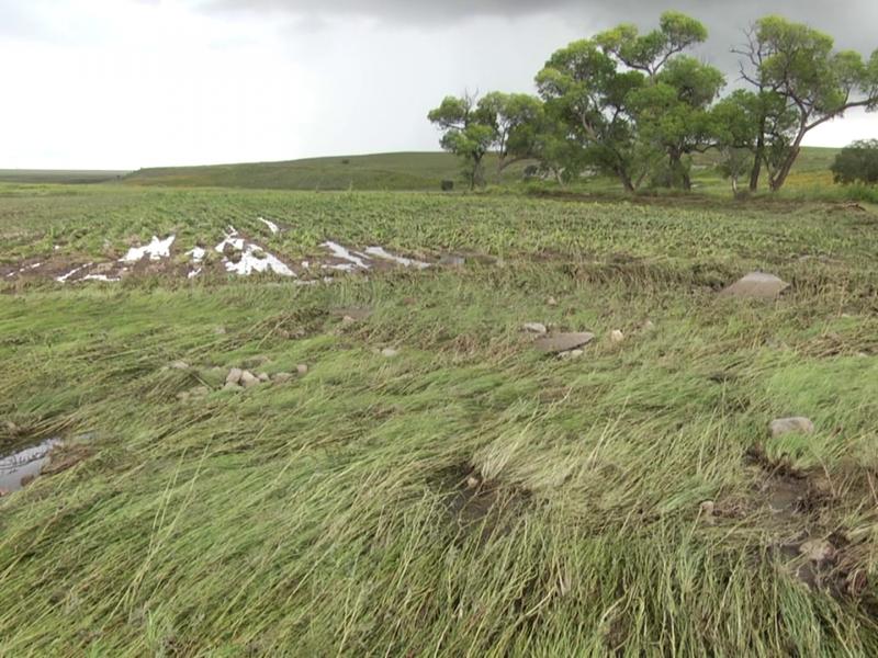 San Aparicio arrasa con cosechas, destruye el patrimonio de familias