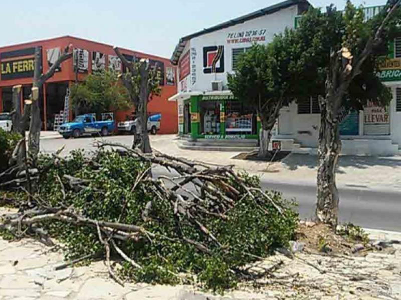 Sancionan a empresas que talaron árboles