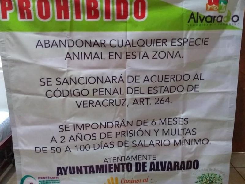 Sancionarán a quiénes abandonen animales en