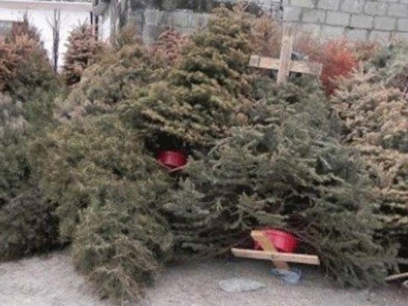 Sanciones por dejar árboles navideños en vía pública
