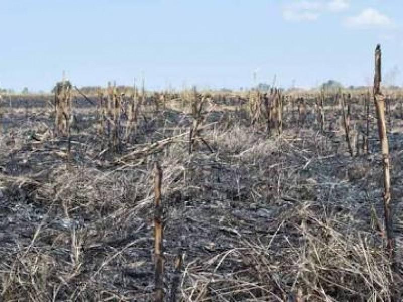 Sanciones por quema de soca: Alcalde de Ahome