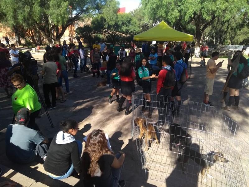 Scouts realizan Feria de Adopción de mascotas