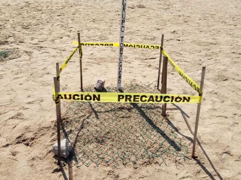 En riesgo áreas de anidación de tortuga marina