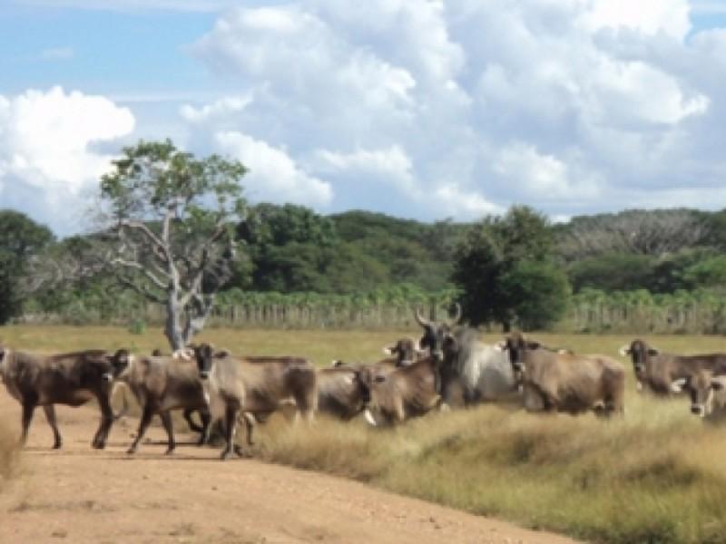 Se busca disminuir muertes de ganado por falta de agua