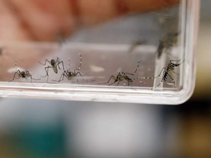 Se confirman 43 casos de dengue en EdoMex