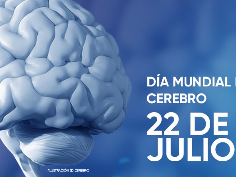 Se conmemora hoy el Día Mundial del Cerebro
