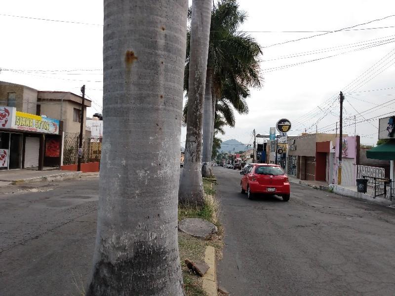 Se debe priorizar al peatón en Av. jacarandas