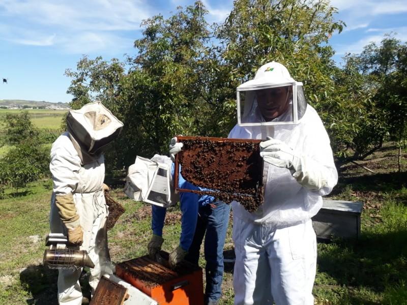 Se desploma 60% producción de miel nayarita