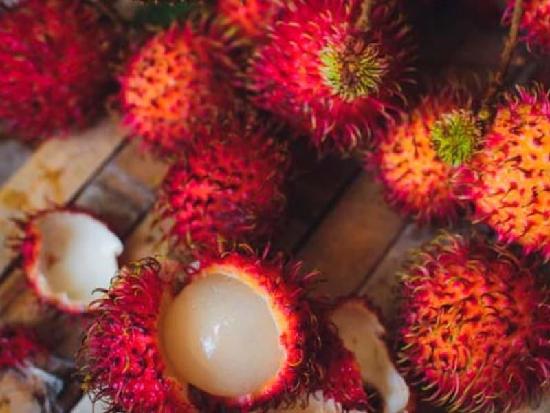 Se desploma precio de rambután; causa afectaciones