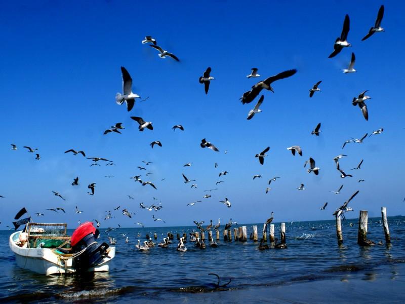 Aparecen los cinco pescadores desaparecidos de Antón Lizardo