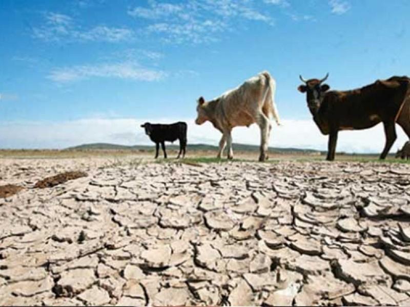 Se estiman 6 mmp en pérdidas por la sequía