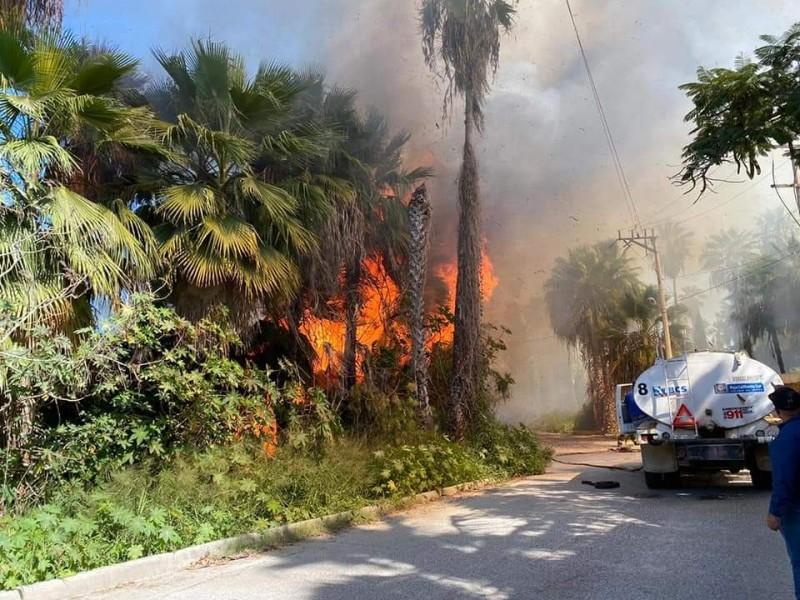 Se incendia zona de palmare en Todos Santos