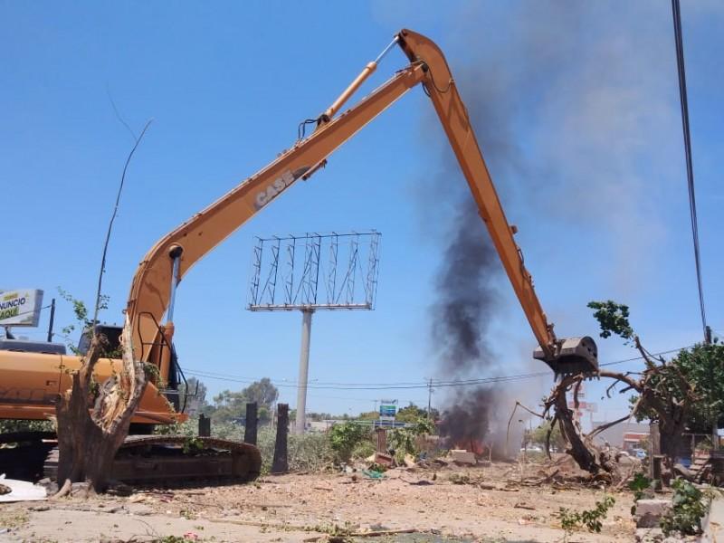 Se inconforman por tala de árboles en la Jaramillo