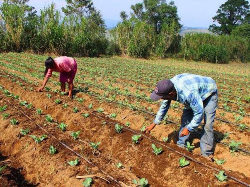 Se pierden 34 hectáreas de siembra