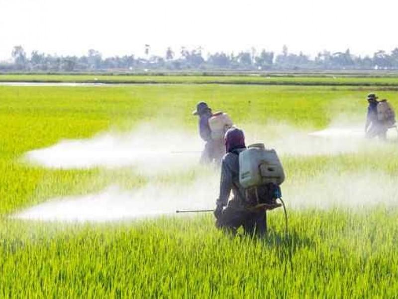 Se posicionan herbicidas chinos en campos mexicanos