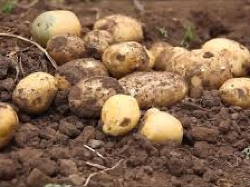 Se preparan horticultores por bajas temperaturas