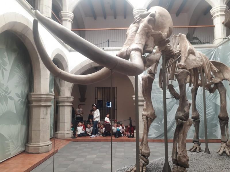 Se prolonga estancia de mamut milenario en Tepic