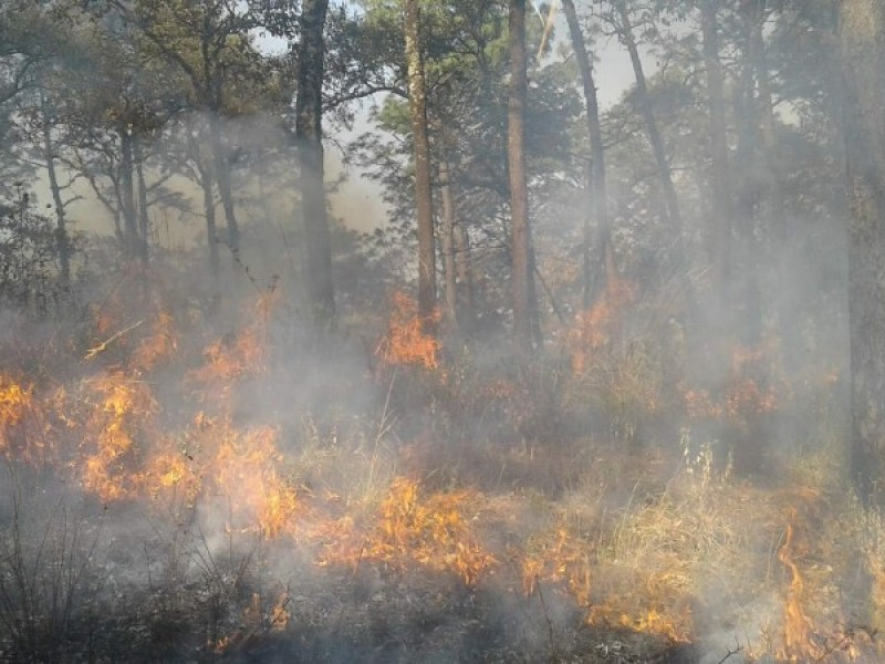 Se reducen 40% los incendios forestales en 2018