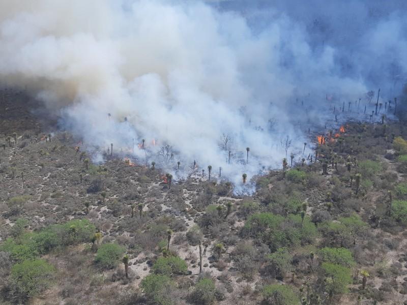 Se registra incendio forestal en Ixtlán del Río, reporta CONAFOR