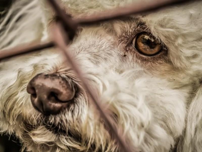 Se registran 20 denuncias por maltrato animal.