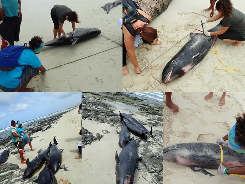 Se suicidan 136 delfines en África