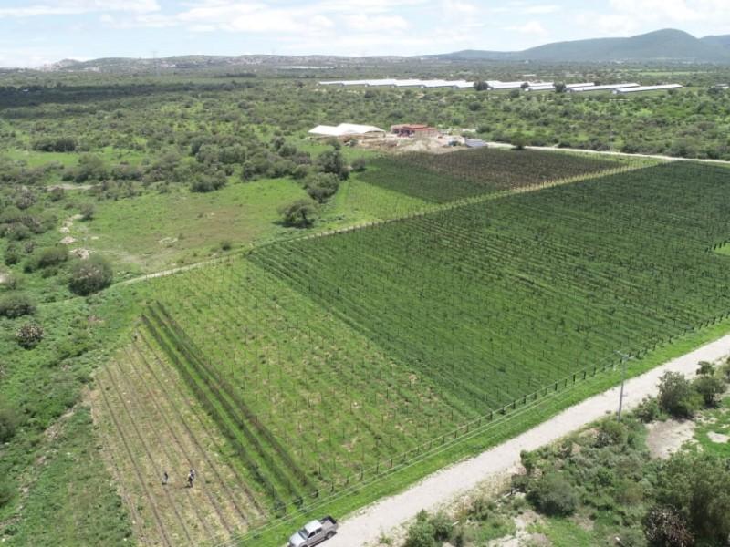 SEDEA fortalece la vitivinicultura con entrega de apoyos