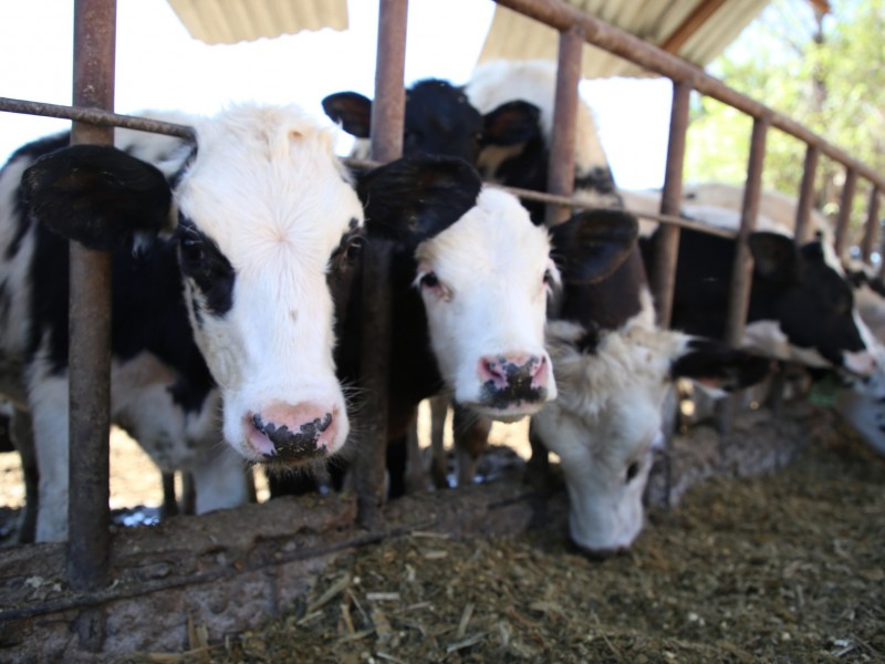SEDEA impulsa estrategias para productores lecheros