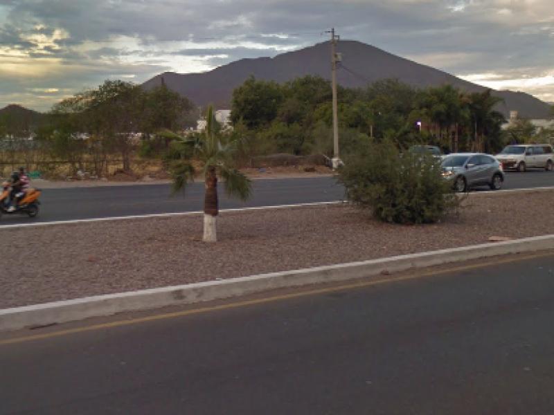 SEDES donara arboles endémicos a Ecología Guaymas