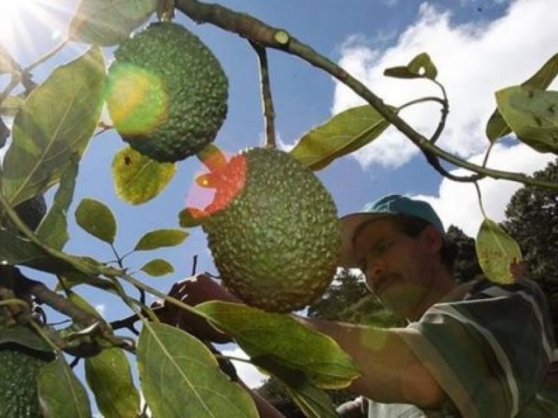 SEMADET revisará huertos de aguacate en San Gabriel