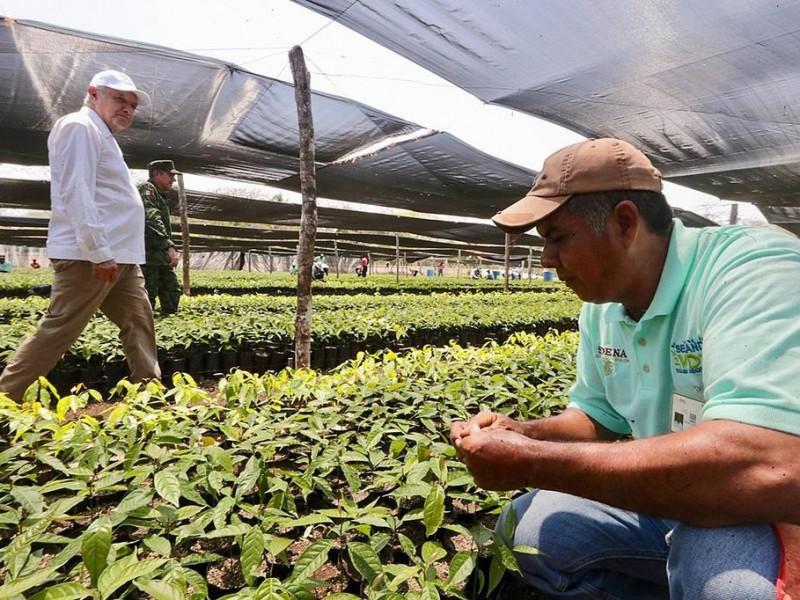 Sembrando Vidas producirá 40 millones de plantas