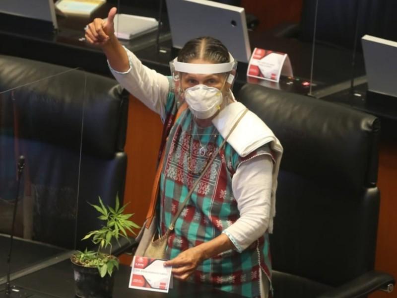 Senado aprueba uso recreativo, médico e industrial de la mariguana