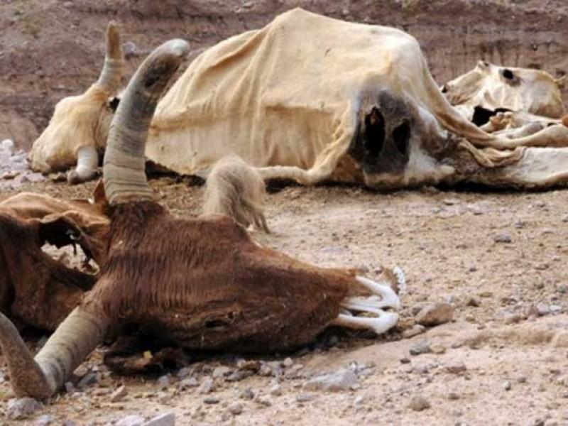 Sequía alcanza niveles preocupantes, se registran primeras muertes de ganado