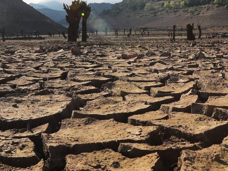 Sequía en el Valle del Mayo dejará 1,406mdp en pérdidas