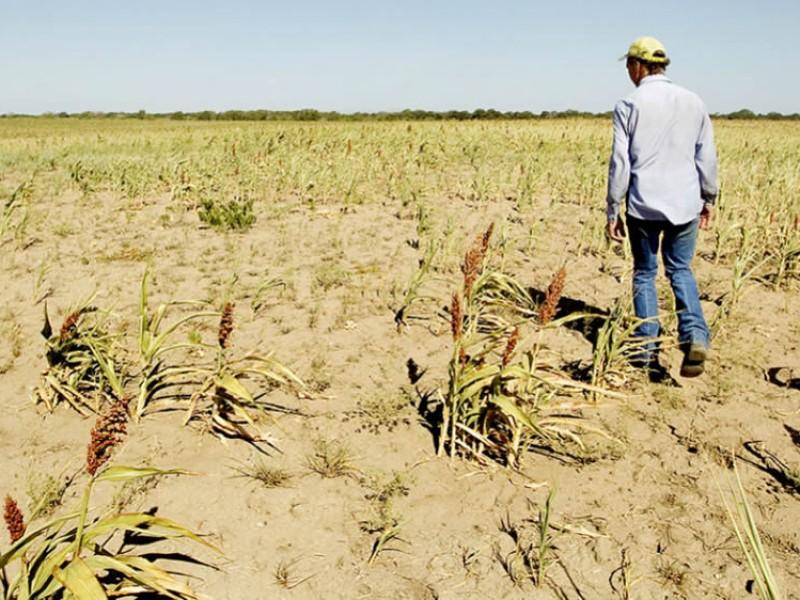 Sequía preocupa a productores agrícolas, temen por sus cosechas