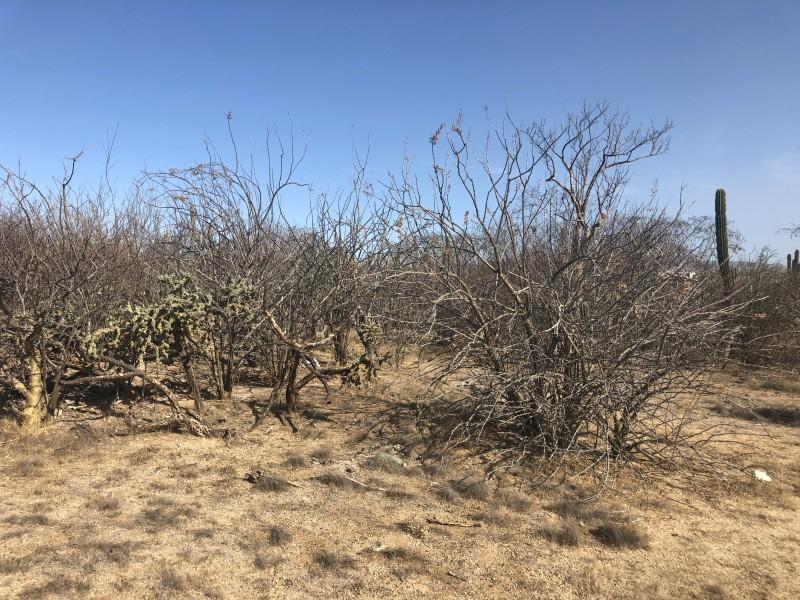 Sequías afectan a ganaderos de la Candelaria