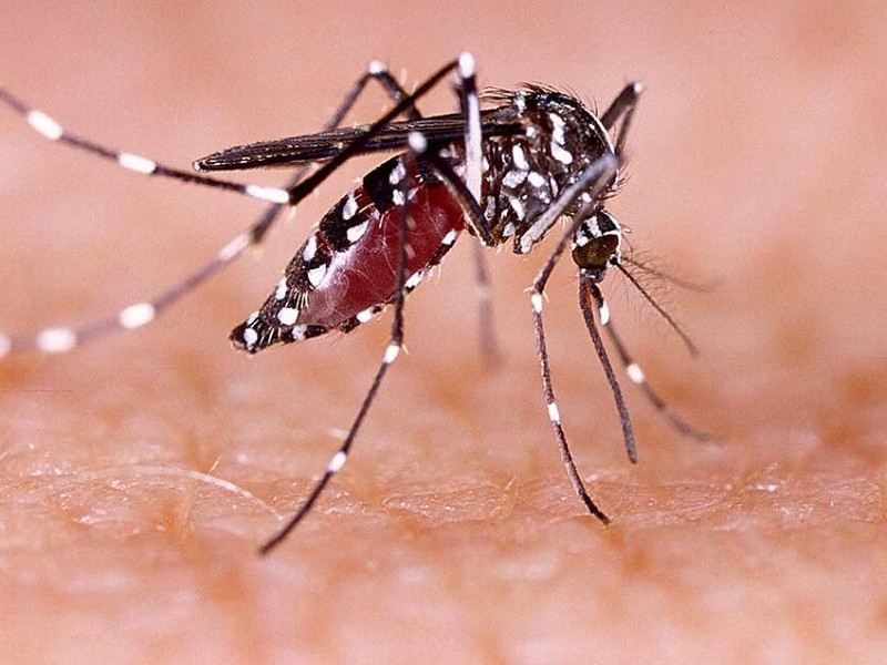 Serotipo de dengue grave es el que circula en Nayarit