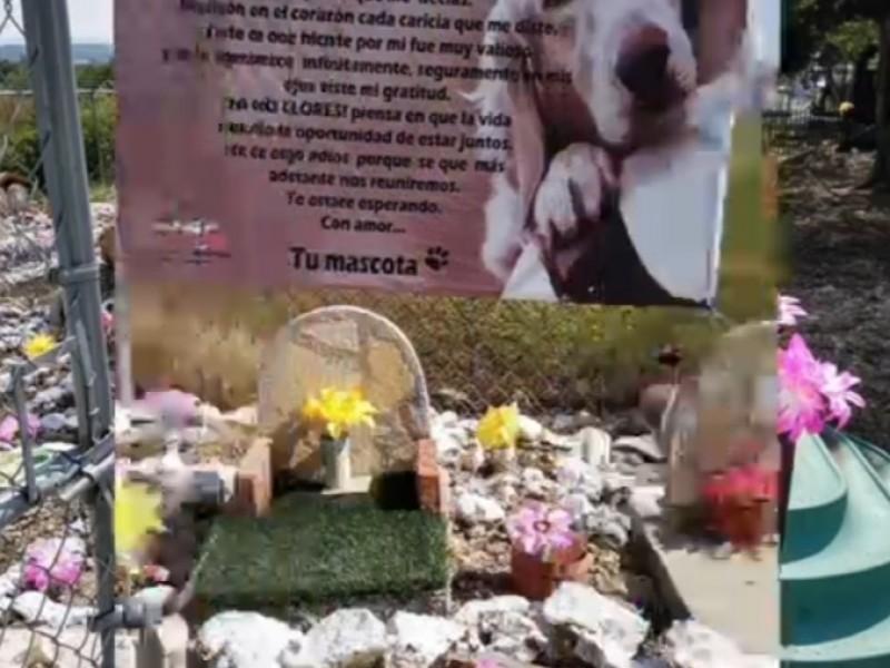 Servicios funerarios para mascotas una realidad costosa