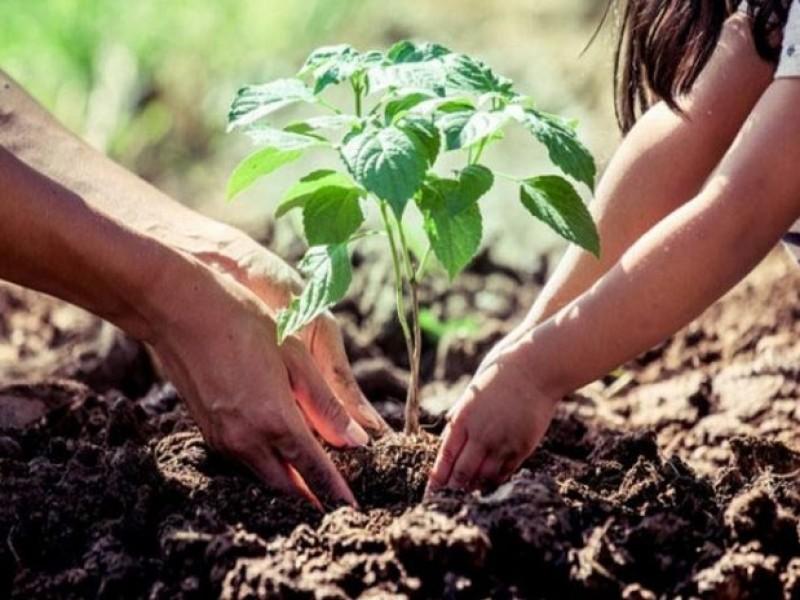 Siembran más de 16 mil árboles y plantas