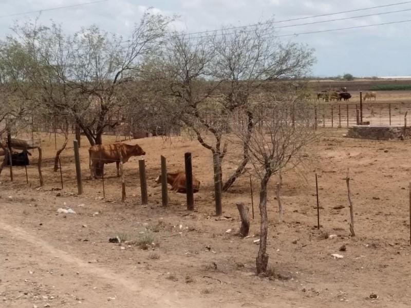 Sigue zona rural de Guaymas sin beneficios por lluvias
