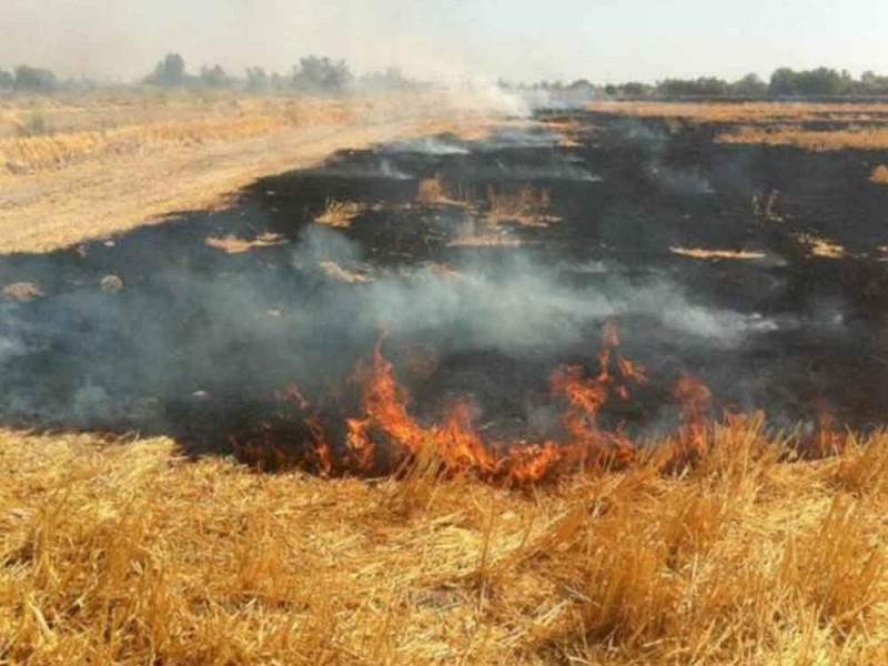 Siguen en aumento los incendios de pastizales en Zamora