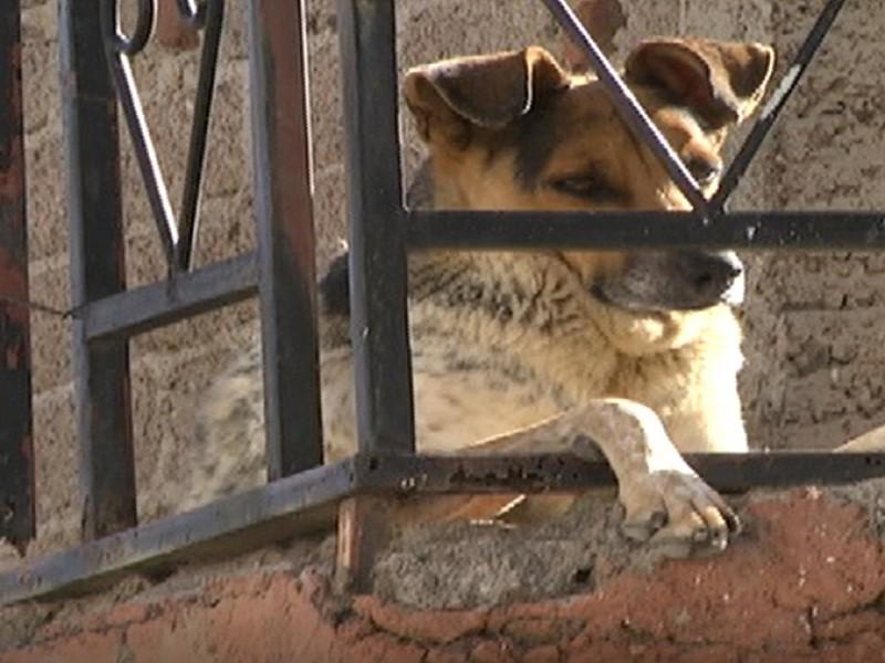 Sin aplicar la Ley de Protección Animal