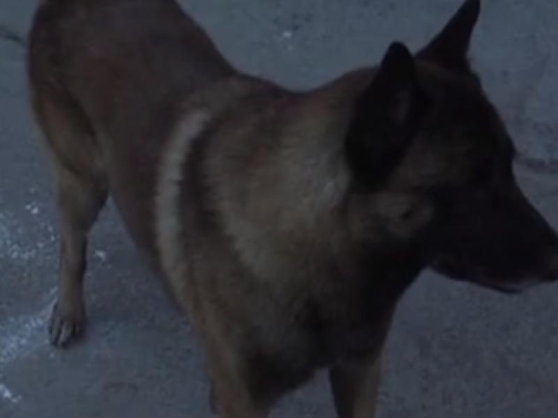 Sin aplicar ley para castigar ataques de perros