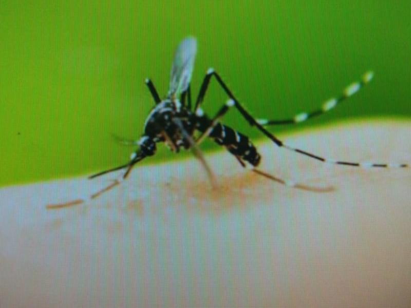 Sin confirmar casos de dengue en Empalme
