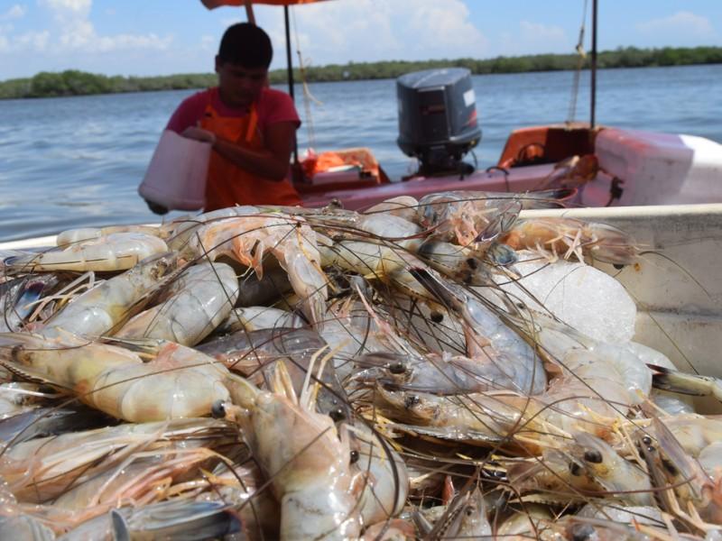 Sin exportación de camarón: ¿Adiós al