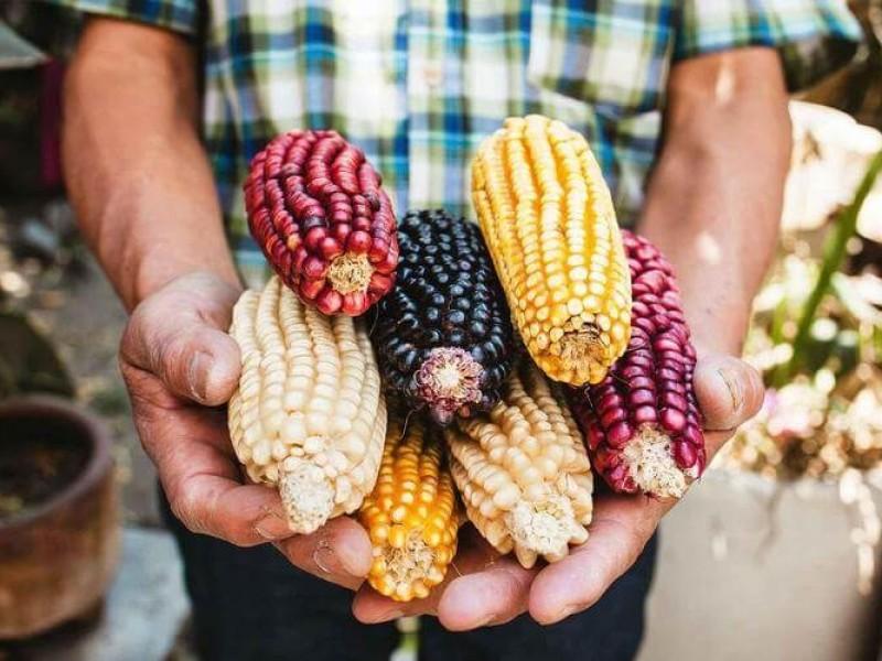Sin maíz no hay país, campaña que toma fuerza