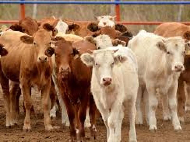 Sin pérdidas de ganado por sequía