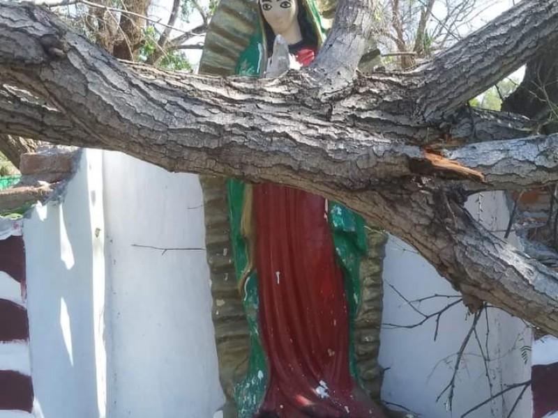 ¡Sin rasguños! Álamo cae sobre la virgen de Guadalupe