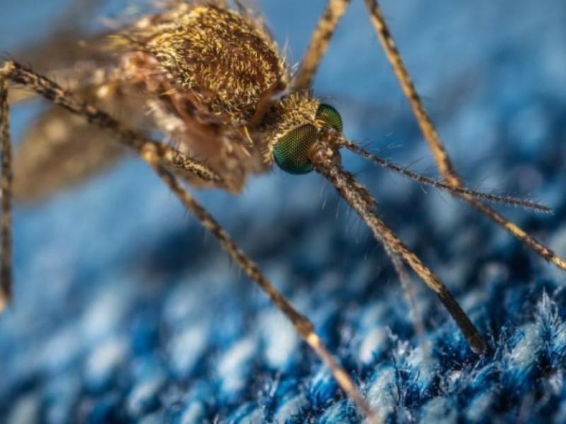 Sin tregua casos de dengue en Jalisco