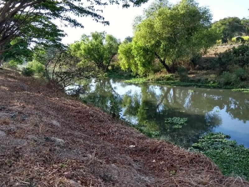 Sociedad civil busca rescatar el río Mololoa