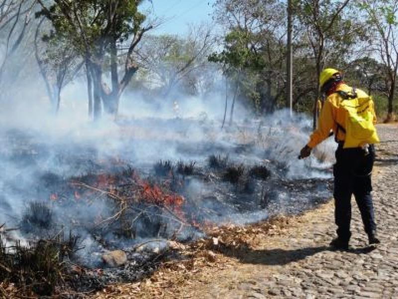Sofocan brigadas incendio forestal originado en Nácori Chico